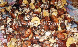 маринованные маслята рецепт