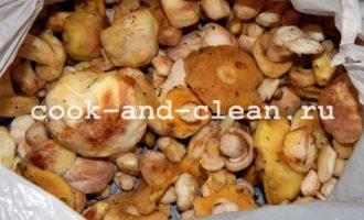 маслята грибы заморозка